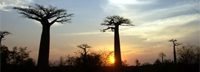 Madagascar: Information on a country rich with culture and biodiversity.