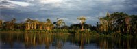 A Place Out of Time: Tropical Rainforests - Their Wonders and the Perils They Face. Information on rainforests, biodiversity, and environmental concerns.