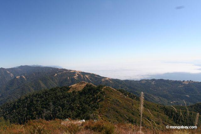 View south from atop Mt. Manuel in Pfeiffer Big Sur State Park