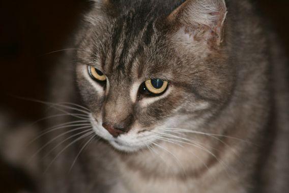Kute Cat 0127_domestic_cat_willie