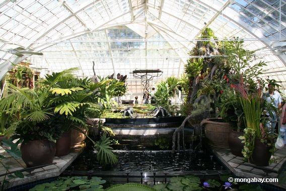 aquatic plants room