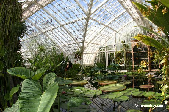 водные растения комната