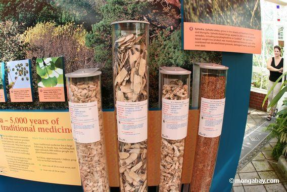 exhibit-medicinal plants