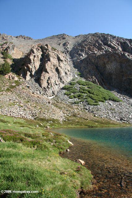 Grass along Bergona lake shore