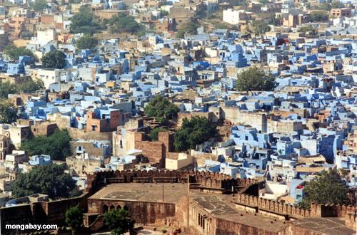 Jodhpur Blue