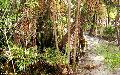 Blackwater Whitesands Swamp, Brazil