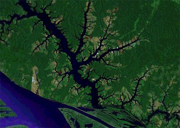 Waterways off the Rio Negro in Brazil