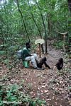 Gorilla trainer helping orphaned gorillas learn forest skills