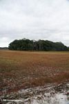 Savana and tropical forest