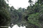 Jungle river in Gabon