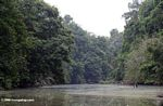 Rain forest along the Mpivie river in Gabon