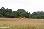 Bulldozers in the savanna with tropical forest as a backdrop