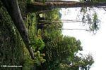 Fallen canopy tree on the edge of a savanna area