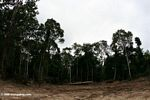 Total deforestation in Gabon