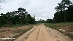 Logging road in Gabon