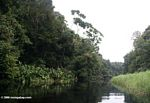 Mpivie, a blackwater river in coastal Gabon