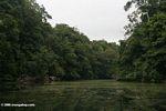 Still blackwater river in the rainforest of Gabon