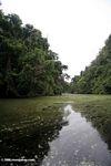 Mpivie river in Gabon