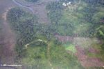 Forest degradation in Gabon