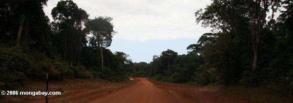 Road in the rainforest of Gabon