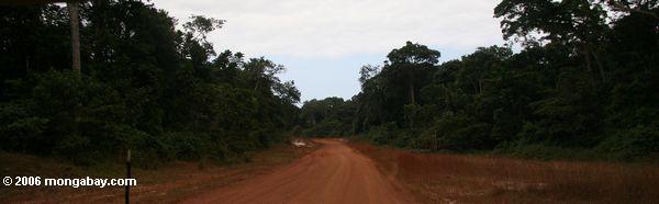 Straße im rainforest von Gabun