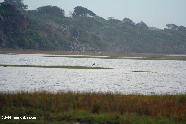 Kran in der oceanside Lagune