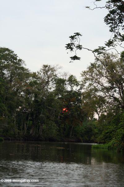 Sonne, die hinter einen Standplatz der Bäume einstellt