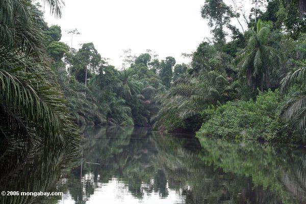 Rio da selva em Gabon
