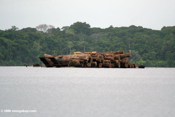 Logs in Gabon. Photo by: Rhett A. Butler.