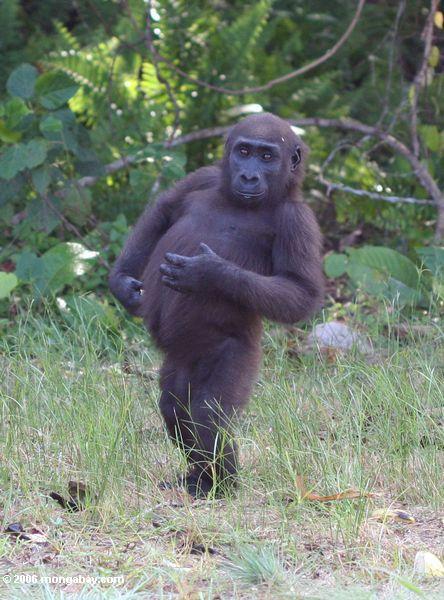 молодых мужчин, стоящих горилла