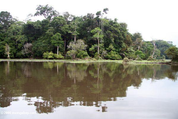 O mais rainforest tropical em Gabon