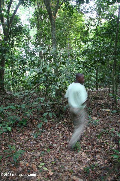 экотуризма руководства ходить через Габон дождевых лесов