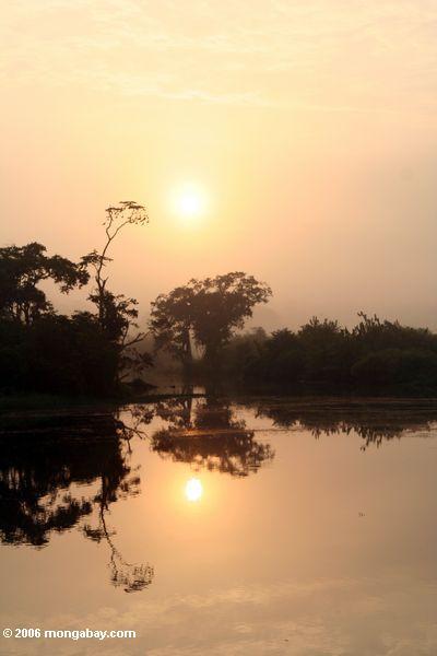 Sunrise sobre o Gabonese o mais rainforest do parque nacional de Loango