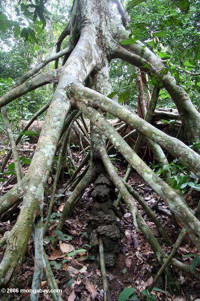 Слон защиты в виде ходулочник корни из дерева купол