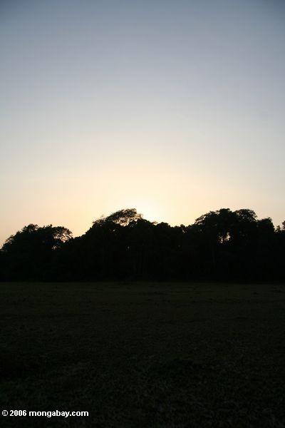 Wald silhouettiert durch die Einstellung der Sonne in Gabun