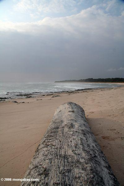 Timber adandoned after washed ashore on a remote beach near Loango National Park