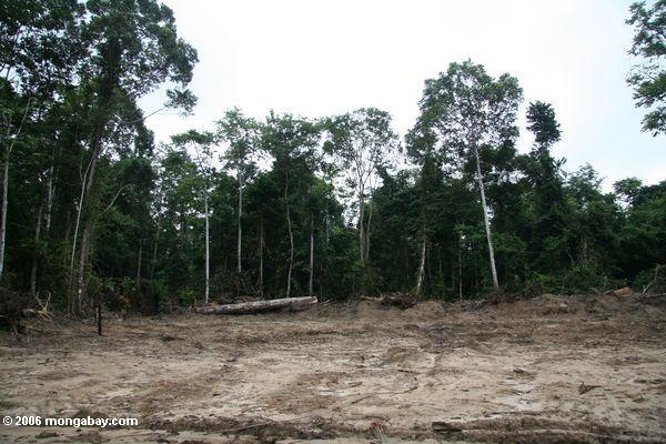 Deforestation from logging in Gabon