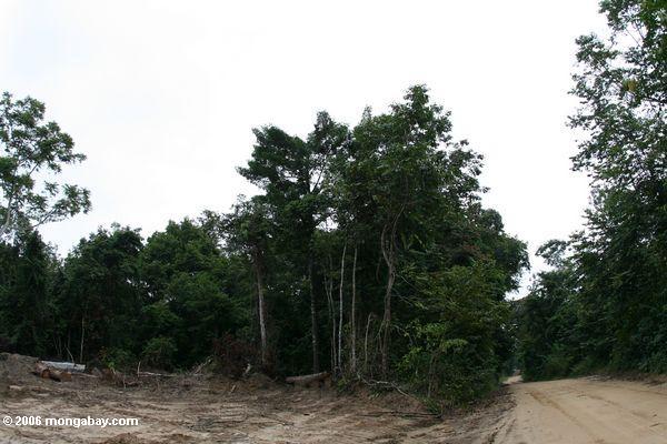 Logging road and deforestation in Gabon