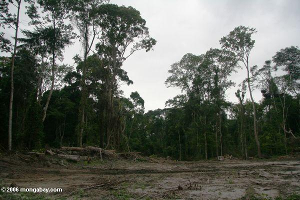 Damage wrought by intensive logging