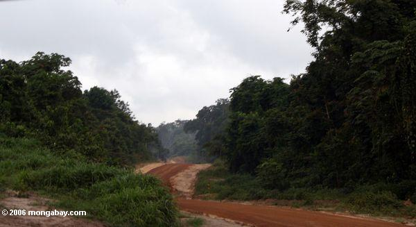 Road for accessing forest timber