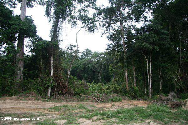 Forest gap created by logging