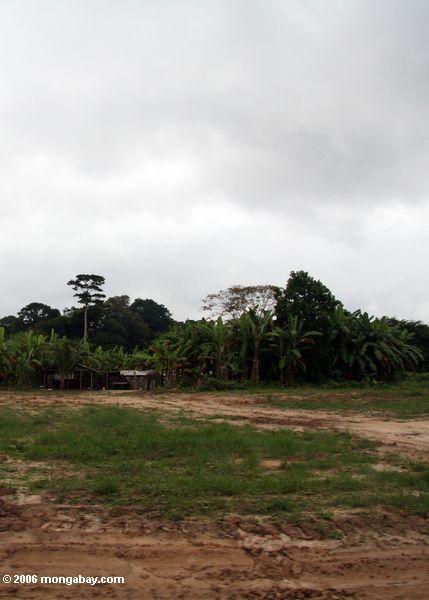 Siedleren, die einer Protokollierung Straße in Gabun Mpivie-Str. Anne