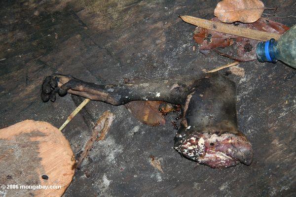 Severed monkey leg in the bottom of a canoe in Gabon. Photo by: Rhett A. Butler.