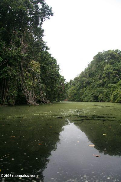 Mpivie river, a blackwater river in the rainforest of coastal Gabon
