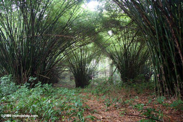 Bamboo cathedral of St Anne, Gabon