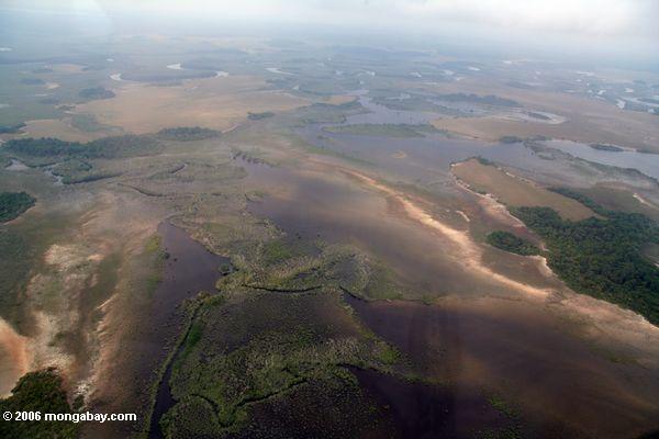 Luftaufnahme des Sumpfs, der überschwemmten Savanne und des Waldes in Küstengabun