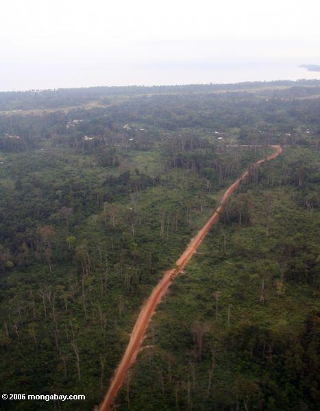 Luftaufnahme des Waldwegs in Gabun