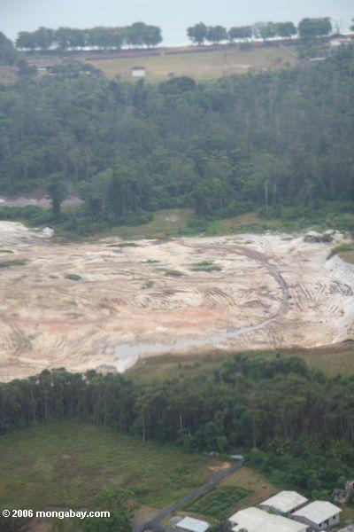 Abholzung in Gabun