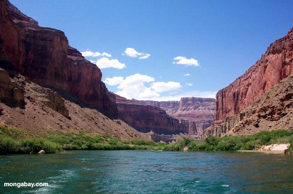 Colorado River near the Grand Canyon. Photo by: Rhett A. Butler.