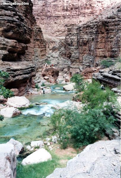 havasu каньон